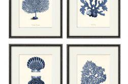Plakat grafika koralowce prezent muszle