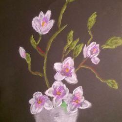 magnolie 1