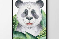 Plakat, obrazek panda 50X70 B2