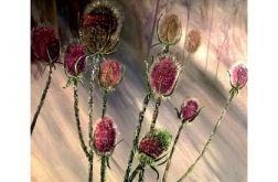 Osty-zimowe kwiaty.