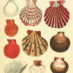 Plakat ocean  grafika muszle  koralowce - null