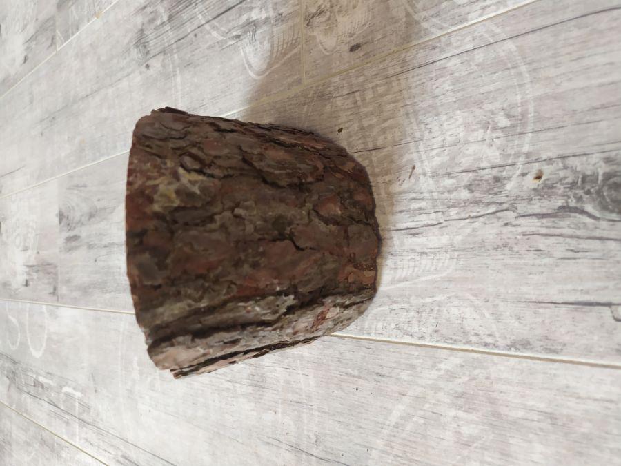 Zdjęcie na drewnie stojące - 2