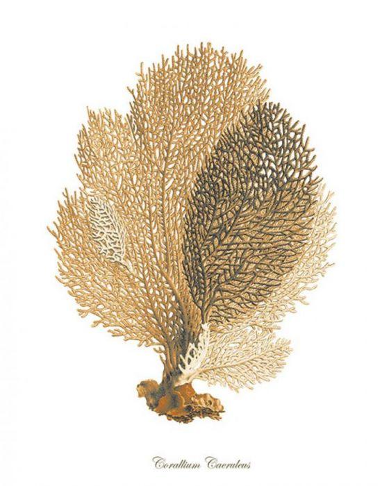 Plakat grafika koralowiec  konik morski - null