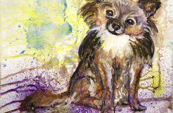 Pies chihuahua z serii Psy i koty