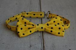 Mucha chłopięca - Żółta w kropki