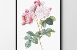 Plakat obraz róża #2 50X70 B2