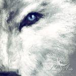 Obraz - Biały wilk - płótno - malowany -