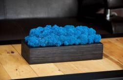 Chrobotek reniferowy w czarnej donicy - Blue