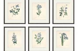 Kwiaty wydruk grafika wydruk vintage zestaw