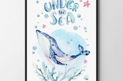 Plakat, obrazek wieloryb 50X70 B2