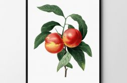 Plakat brzoskwinia vintage 50X70 B2