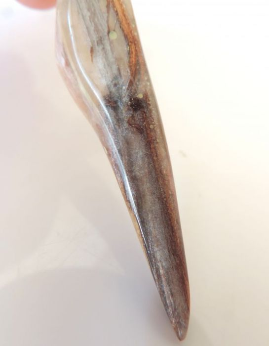 Dinosaur tooth, resin and silver, Gratis