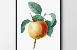 Plakat obraz jabłko 50X70 B2