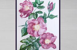 Obraz akwarelowy Dzika róża
