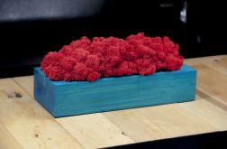 Chrobotek reniferowy, turkusowa donica - Red