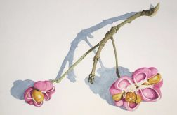 Botanical art, motyw roślinny, róż, pomarańcz