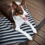 kocyk dla psa Moody stripes light pink M