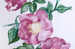 Malowana dzika róża