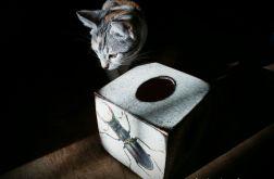 Chustecznik w owady