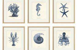 Plakat grafika muszle konik morski prezent 6