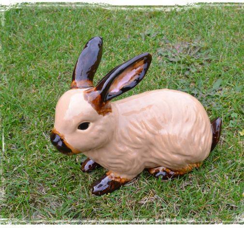 Rudy królik ogrodowy