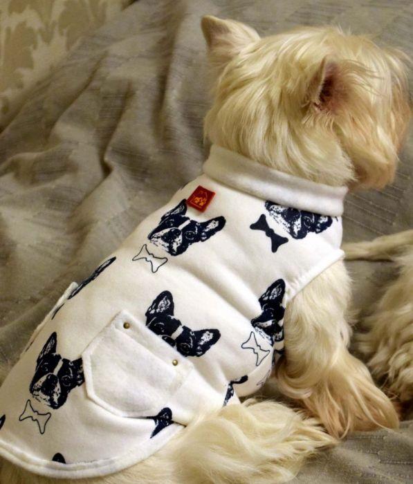 Bluza dresowa, kurtka, ubranko dla psa