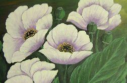 obraz akrylowy - białe maki