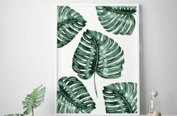 Plakat Monstera Pattern 50X70cm B2