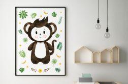 Plakat, obrazek małpka 50X70 B2