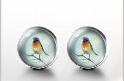 Kolorowy ptak - kolczyki wkrętki