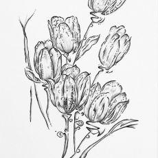 Grafika czarno - biała - TULIPANY