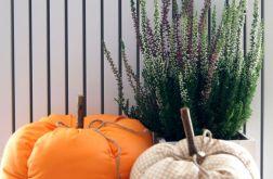 Bawełniane dynie, królowe jesieni!