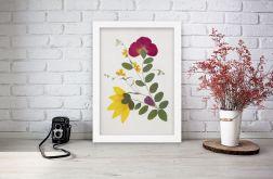 Obrazek A4 Prawdziwe suszone kwiaty 001