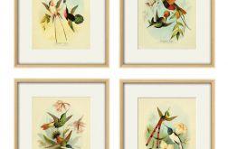 Grafika ptaki kolibry prezent historia natura