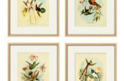 Grafika koliber ptaki prezent natura