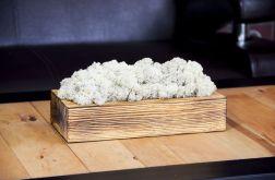 Mech chrobotek w szczotkowanej donicy - White