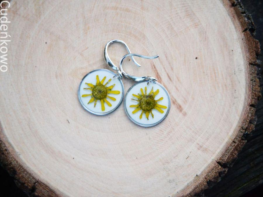 Zatopki żółty kwiat - 3