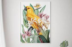Plakat papuga w kwiatach 50x70 cm