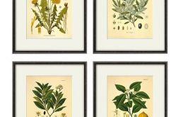 Kwiaty wydruk grafika wydruk vintage