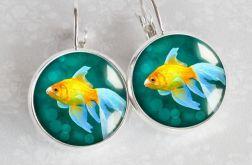 Złota rybka- kolczyki na biglu angielskim posrebrzane