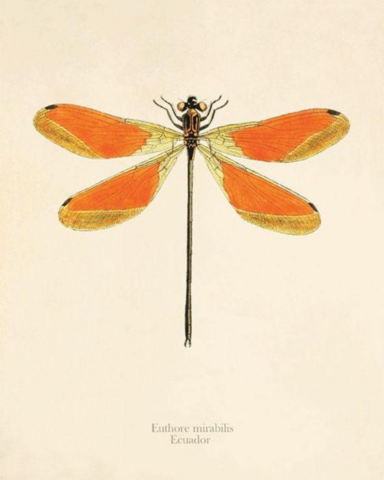 Grafika ważka motyle prezent historia natura -