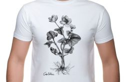 Kaczeniec - t-shirt - rozmiary i kolory