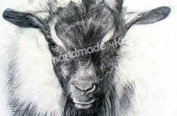 portret twojego zwierzaka - czarno-biały