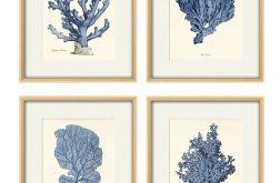 Plakat grafika koralowiec prezent muszle