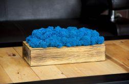 Mech chrobotek w szczotkowanej donicy - Blue