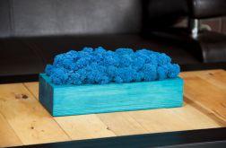 Chrobotek reniferowy w turkusowej donicy Blue