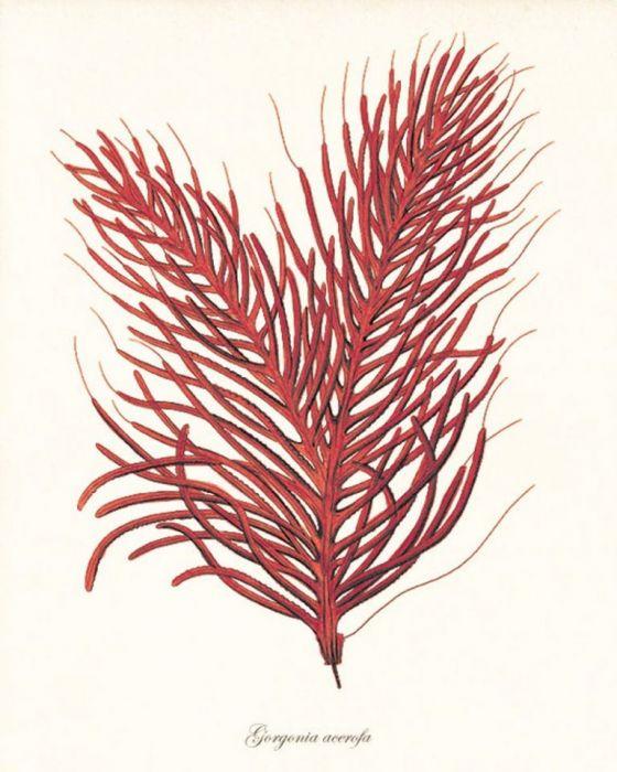 Plakat grafika koralowce morskie  prezent - null
