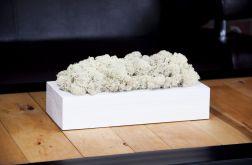 Chrobotek reniferowy w białej donicy - White