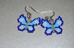 Błękitne motylki