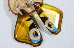 Kolczyki- żółte skrzydła motyla